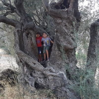 Walking to Ancient olive tree.